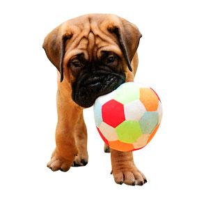 Tooel Hundespielzeug im MenschHund! Shop